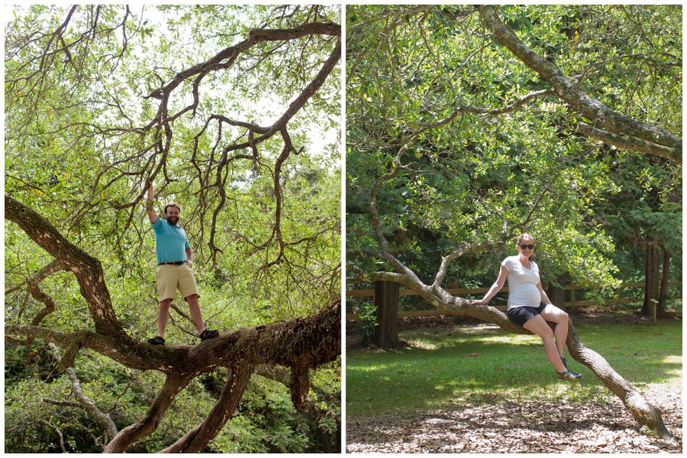 climbing live oak trees