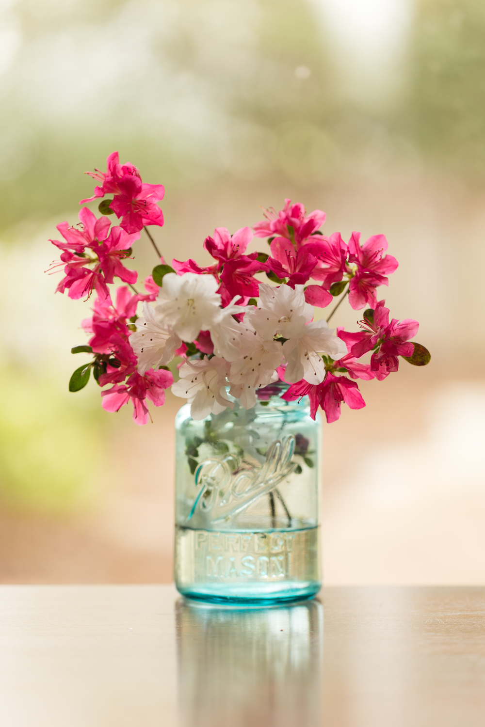 still life photo of magenta azalea flowers in a blue mason jar (Uninvented Colors Photography)