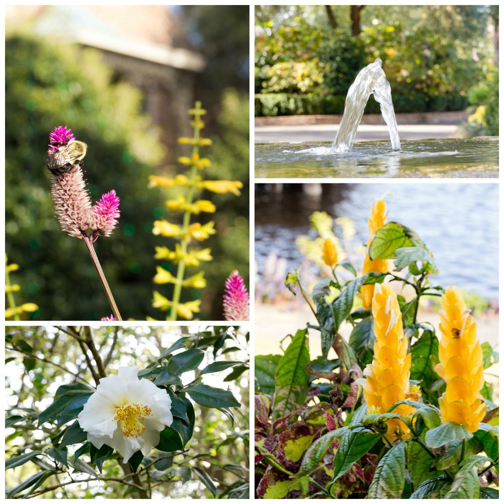 Bellingrath Gardens fountain, bee, flowers