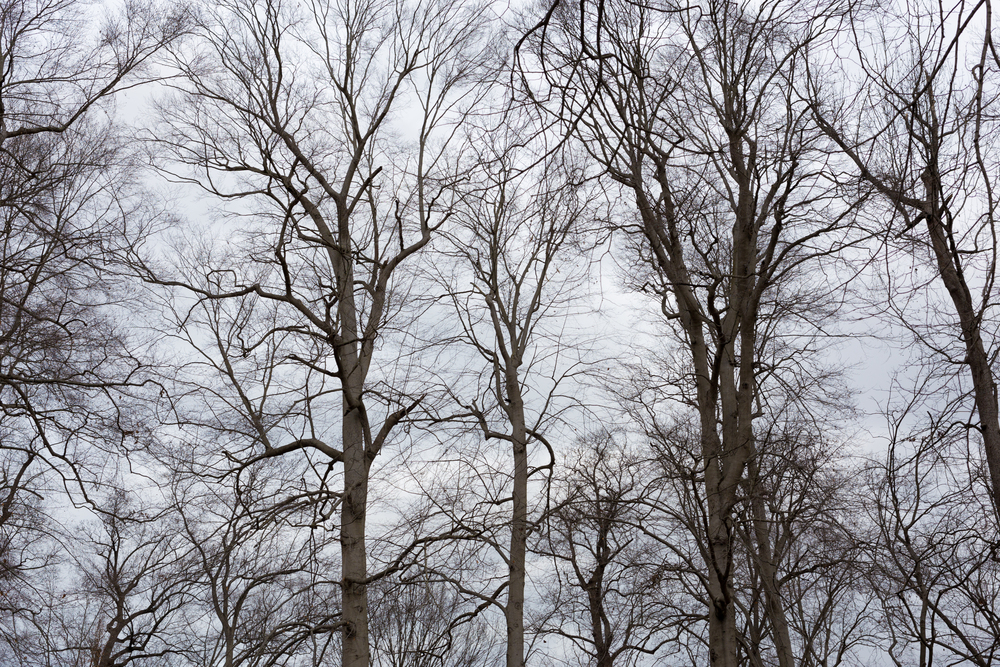 bare branches in winter (Central Park, Ashland, Kentucky)