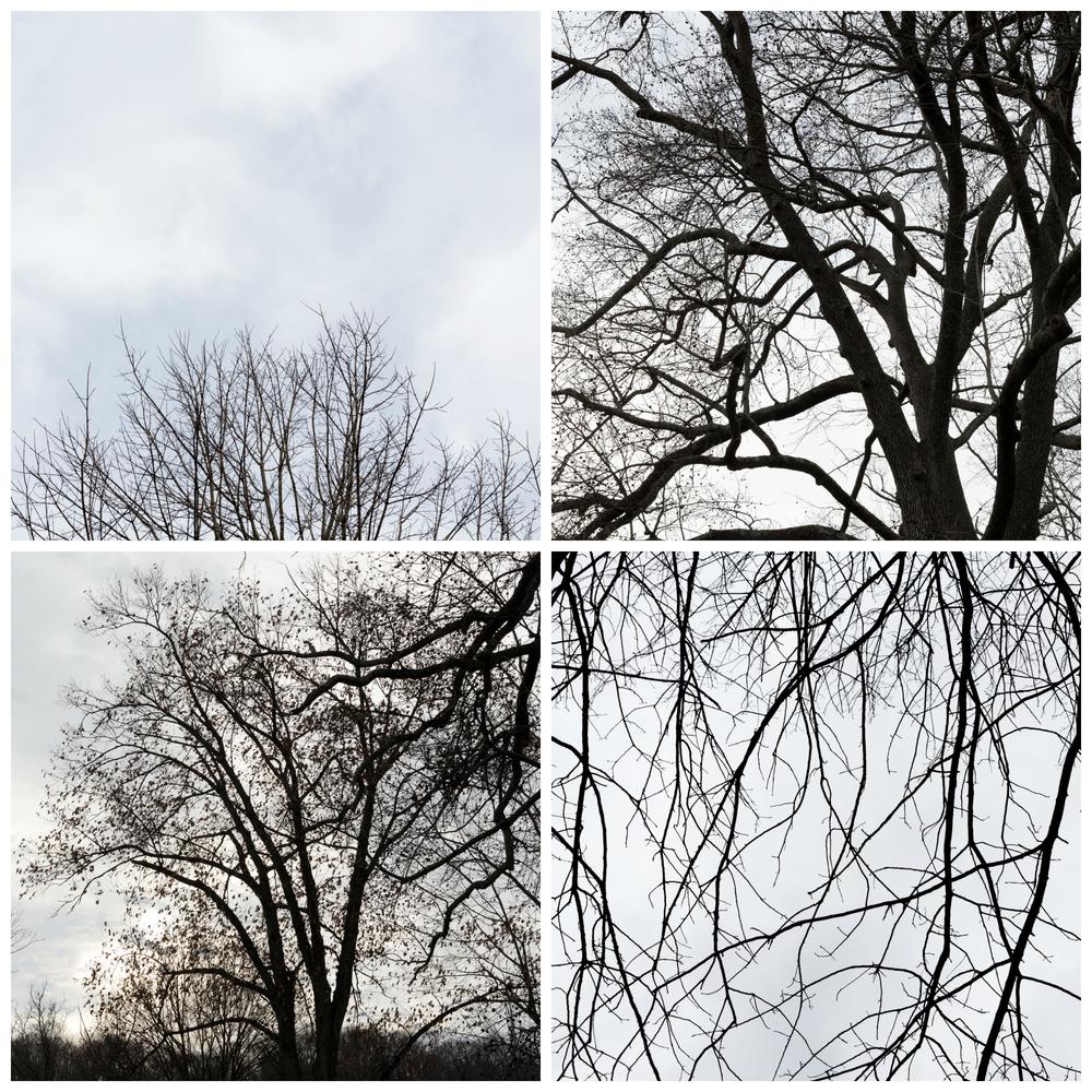 bare winter branches