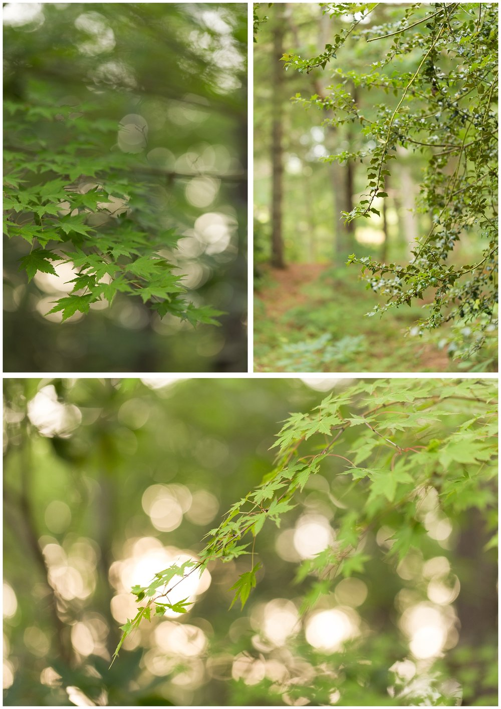 macro nature photos with leaves and bokeh in the forest