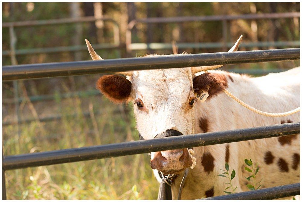 bull at Crosby Arboretum