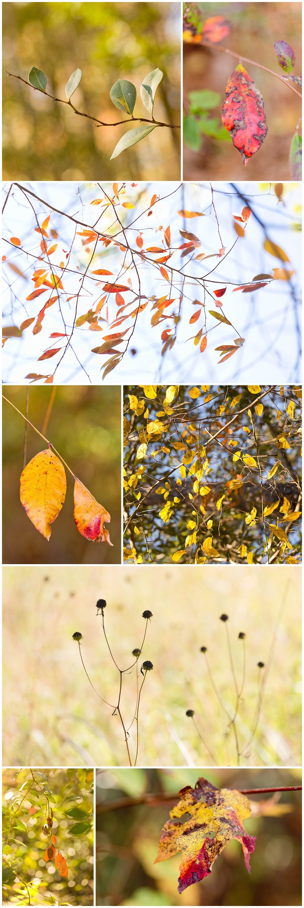 macro nature photography by Uninvented Colors (fall leaves in Mississippi)
