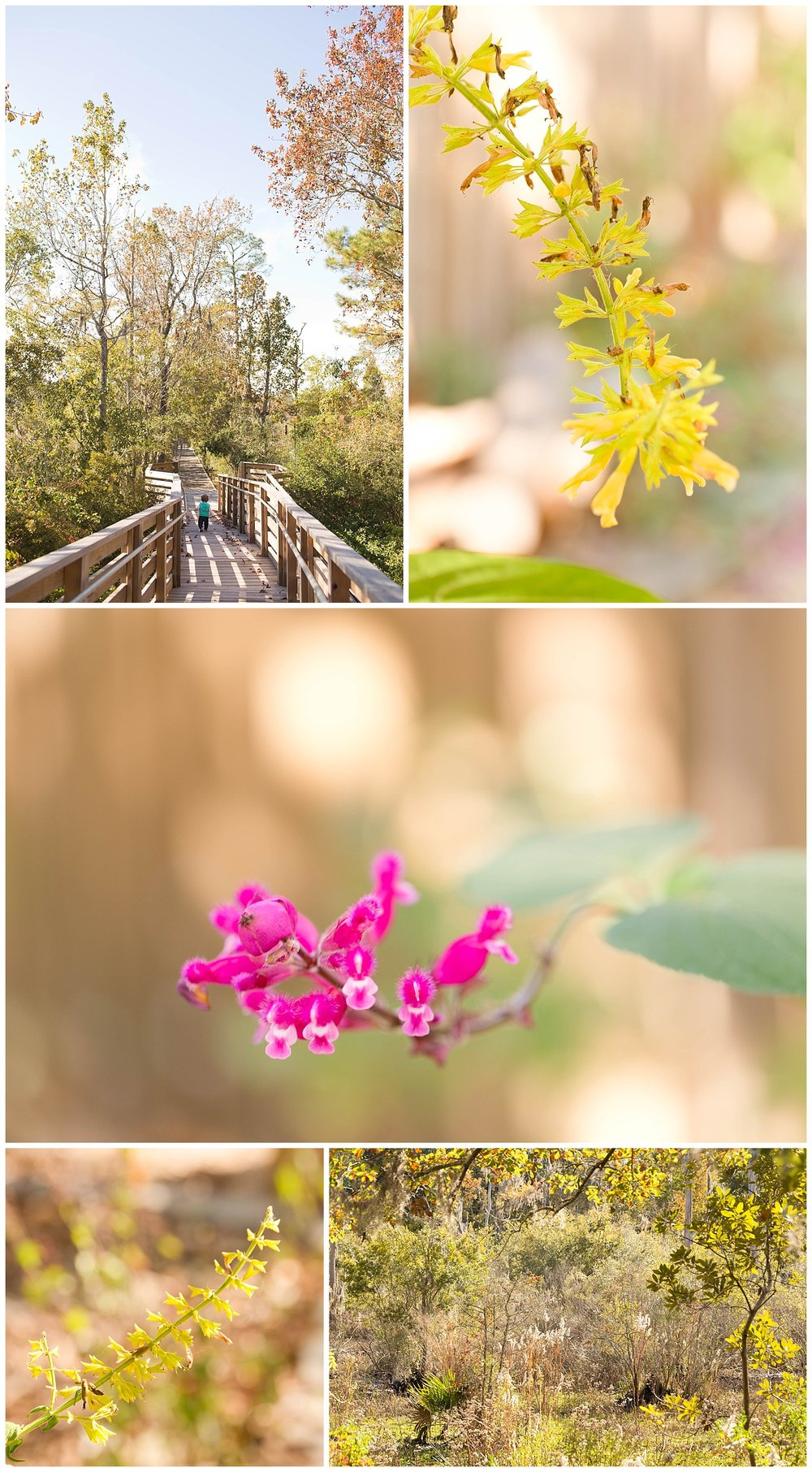 flowers and trees in nature, Pascagoula, Mississippi