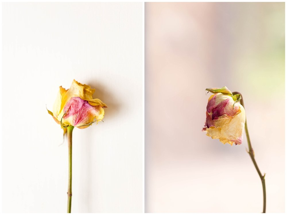 still life floral photographs with wilted roses
