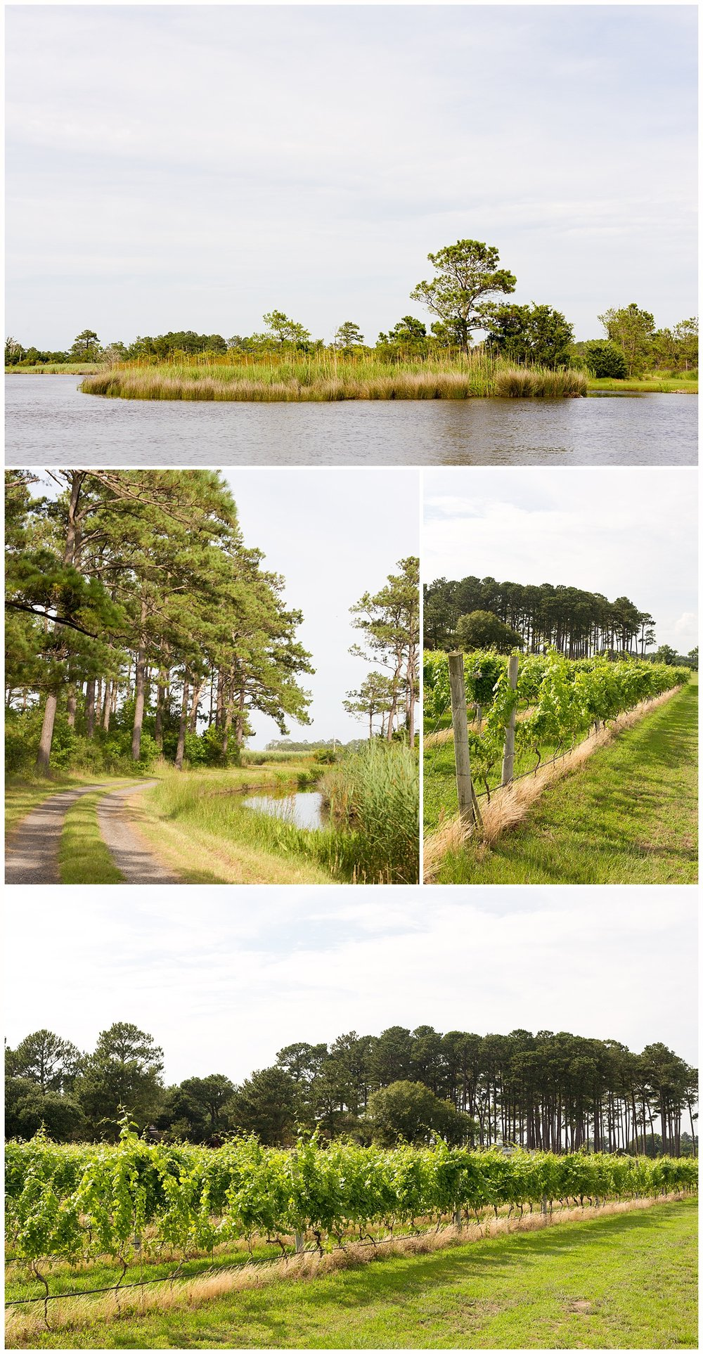 Sanctuary Vineyards outdoor photos - coastal North Carolina winery