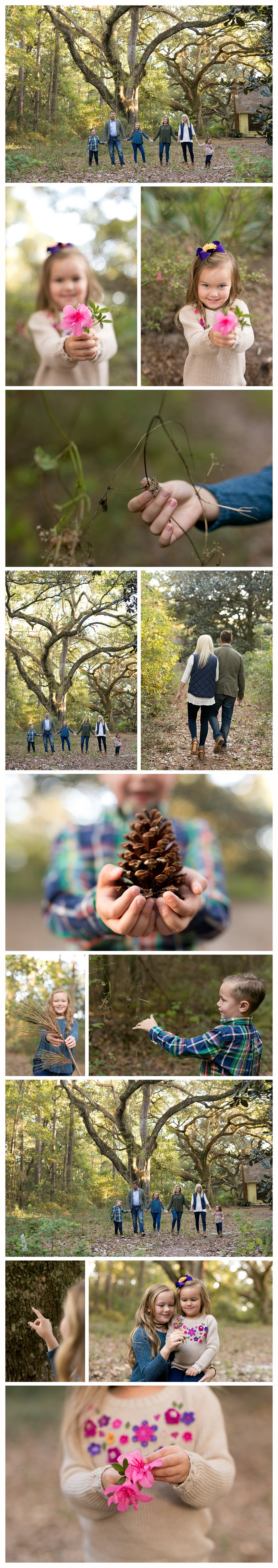 outdoor lifestyle family photos, climbing trees and playing outside with flowers and pine cone