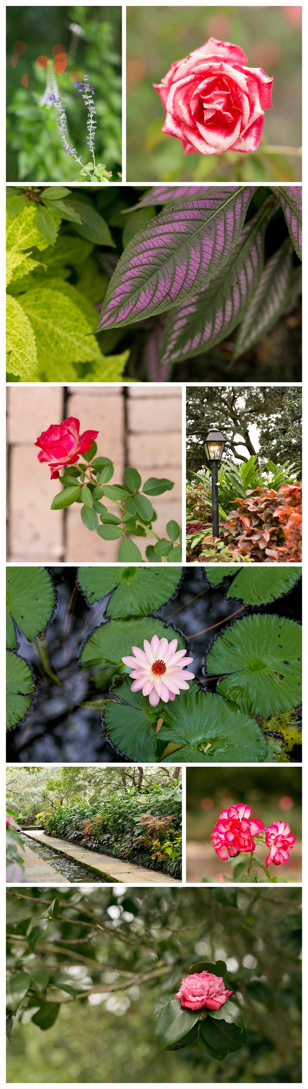 flowers at Bellingrath Gardens