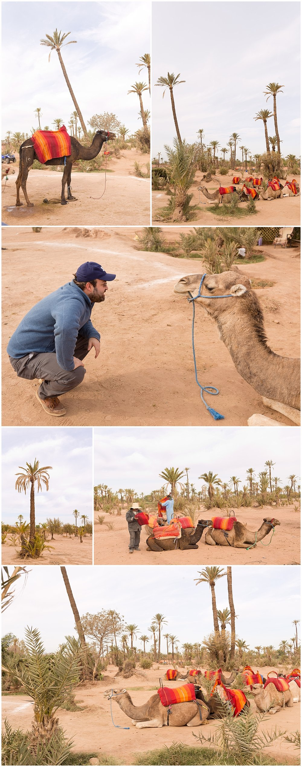tourist with camels in Marrakech, Morocco travelogue