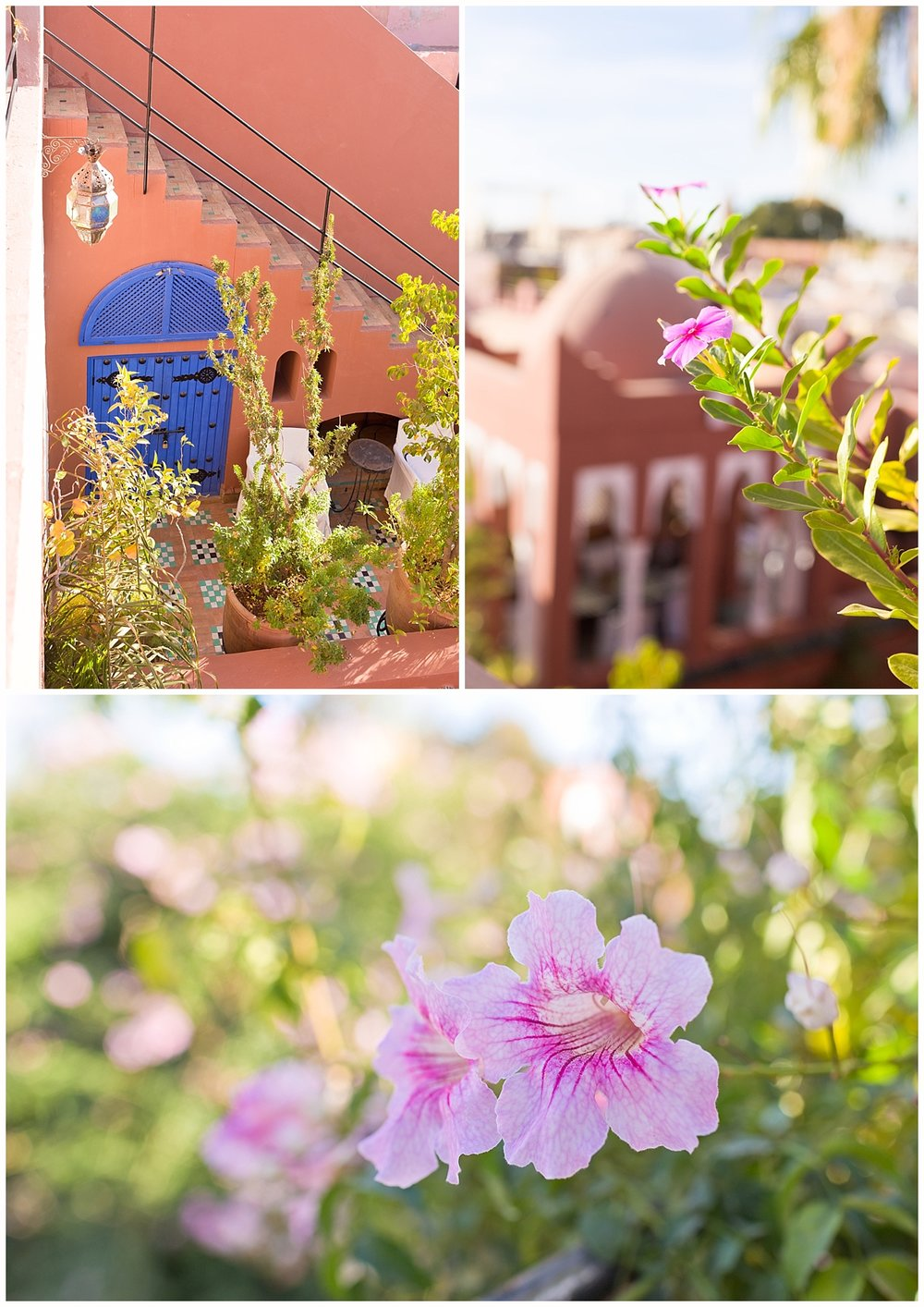 flowers and plants on rooftop at Riad Kaiss, Marrakech, Morocco
