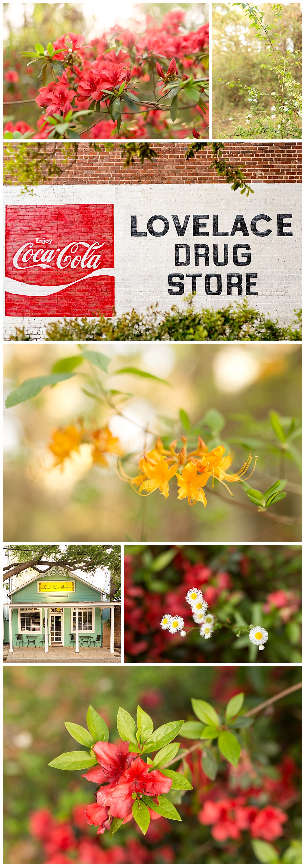 floral photography in Ocean Springs, Mississippi