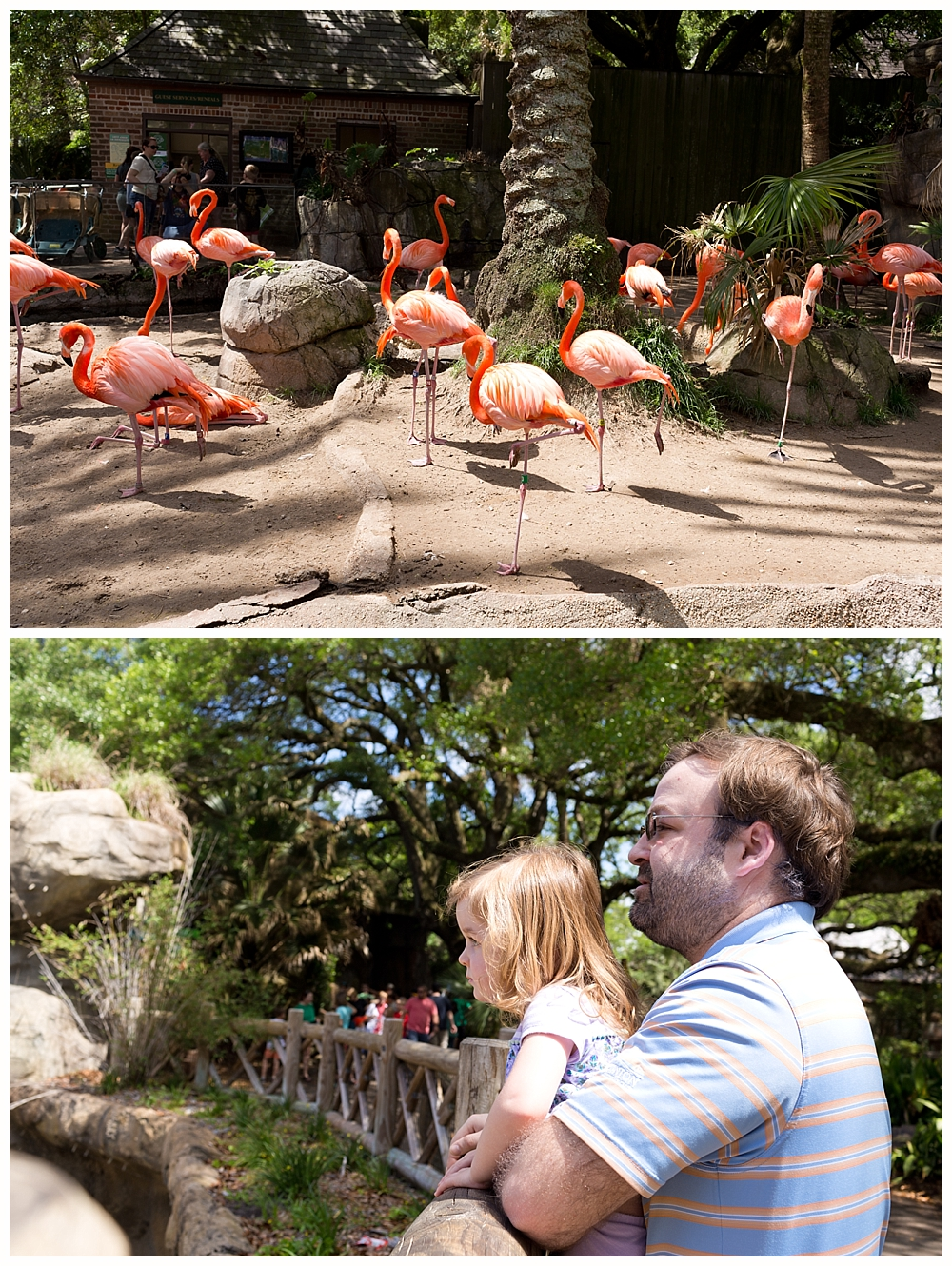 flamingo exhibit at New Orleans Audubon Zoo