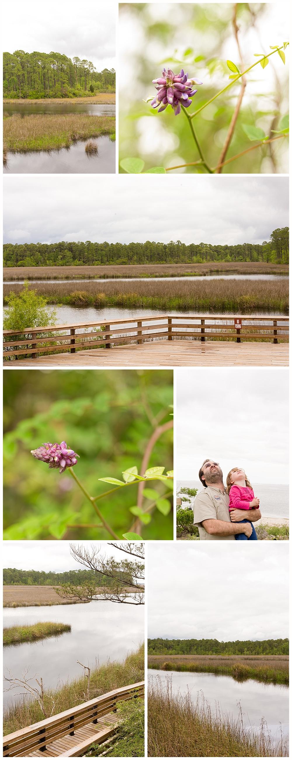 Gautier, Mississippi nature photography at MGCCC Estuarine Education Center