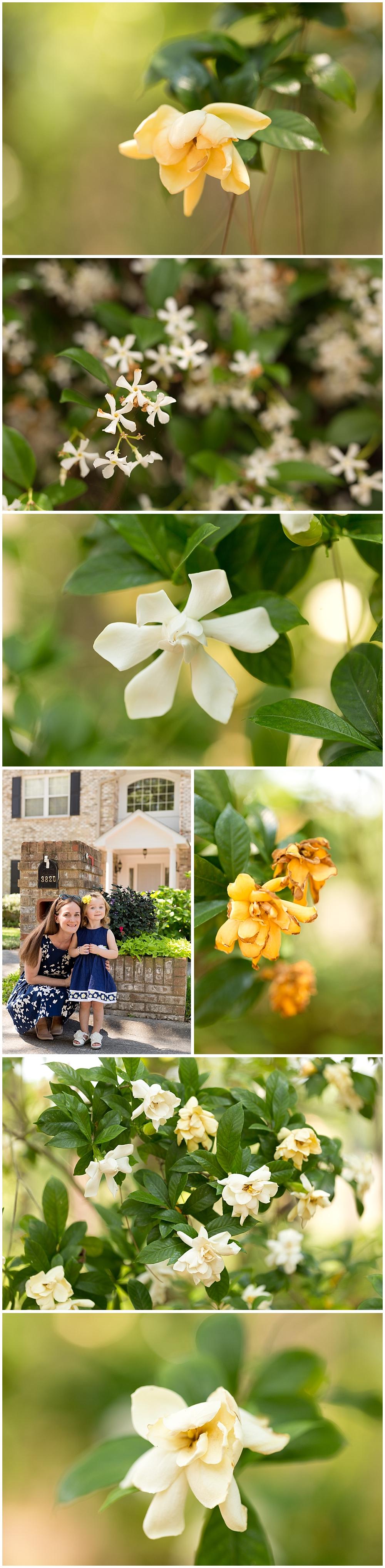 beautiful spring flowers in Ocean Springs, Mississippi