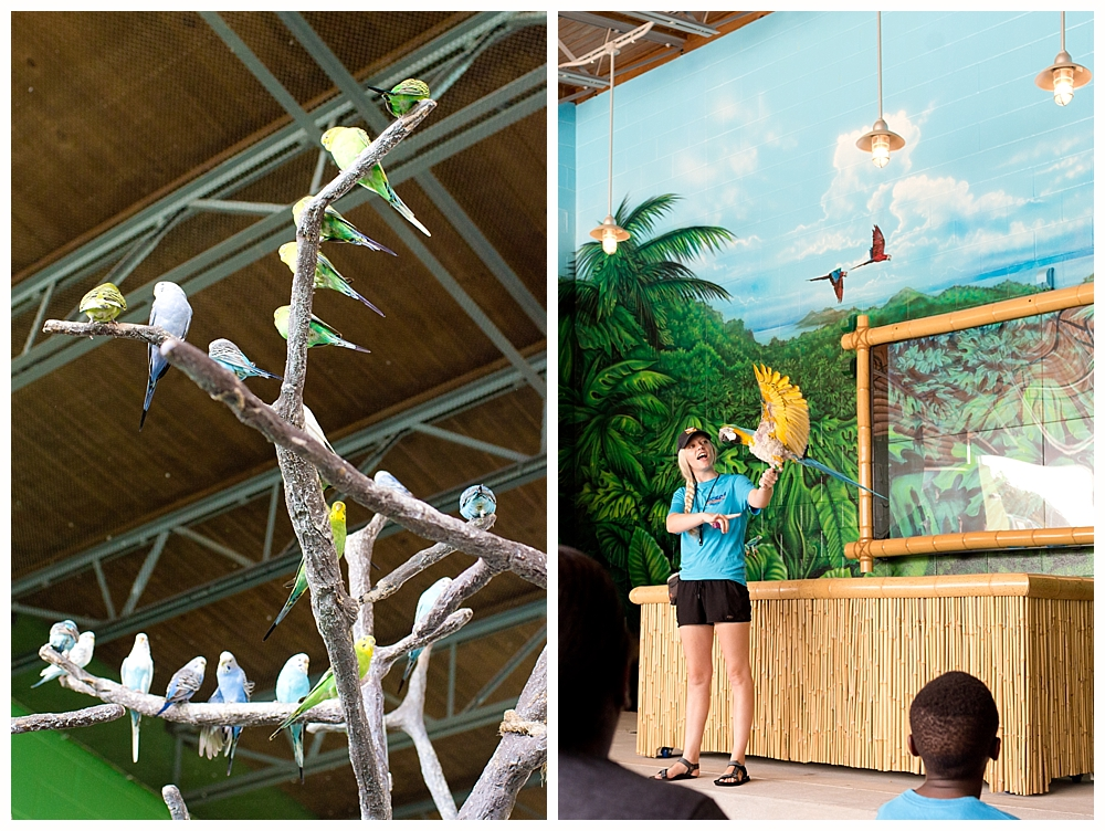 bird show at Ocean Adventures Marine Park - Gulfport, MS