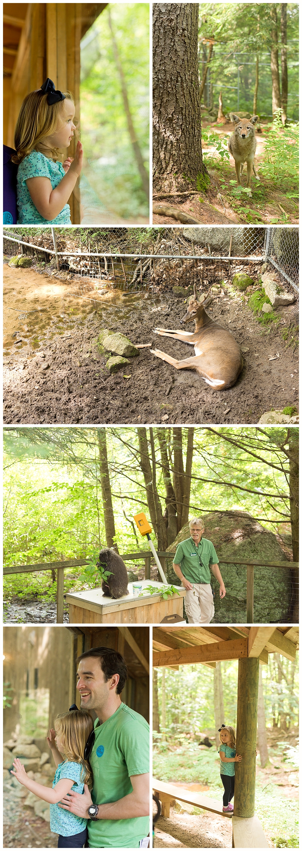 animals at Squam Lakes Natural Science Center