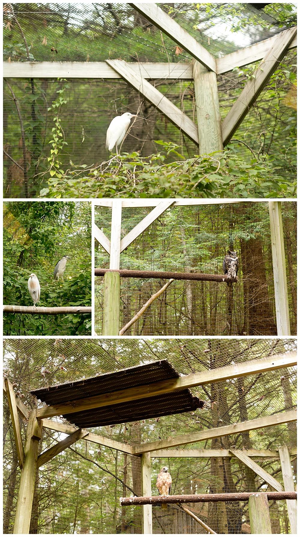 bird exhibit at Squam Lakes Natural Science Center