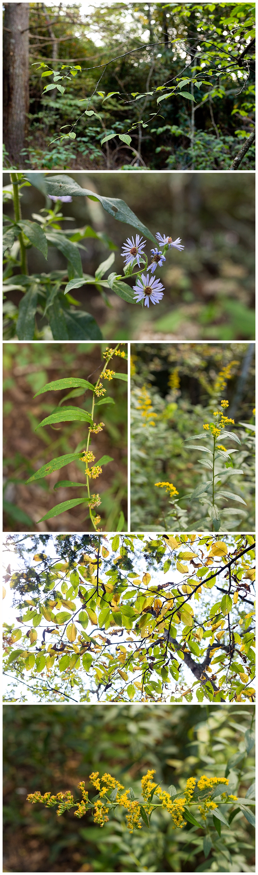 flowers blooming on Brasstown Bald hiking trail in Georgia