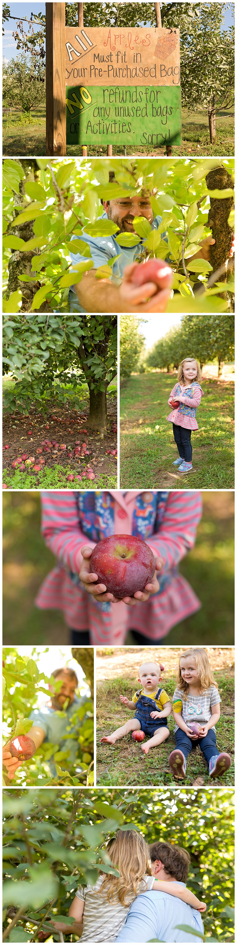 apple-picking at BJ Reece Orchards in Ellijay, Georgia
