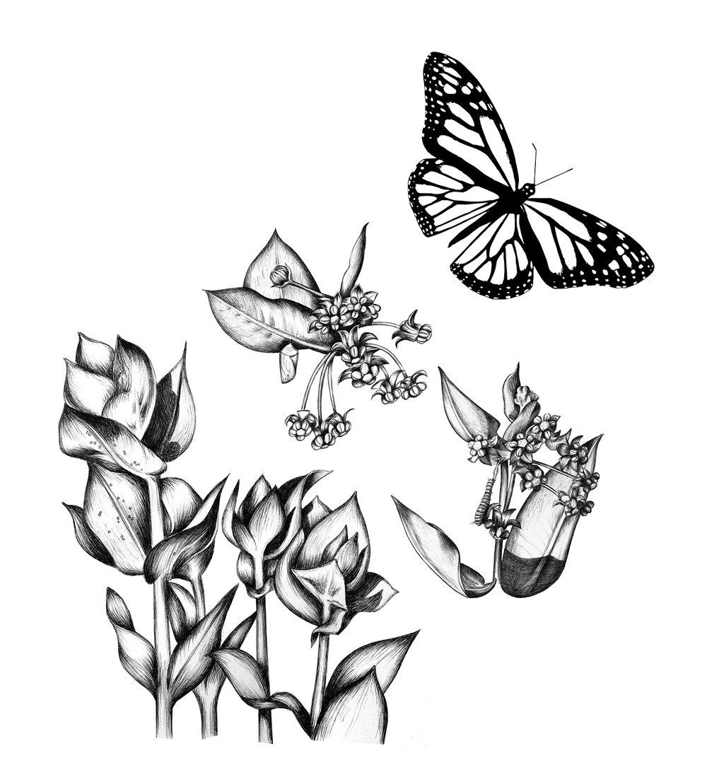 metamorphosis illustration Anna Friedland.jpg