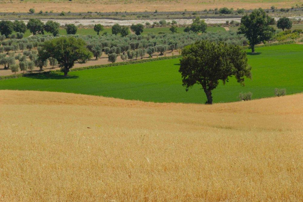 landscape 000_0108.jpg