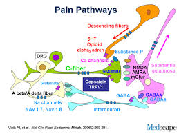 Pain Pathways
