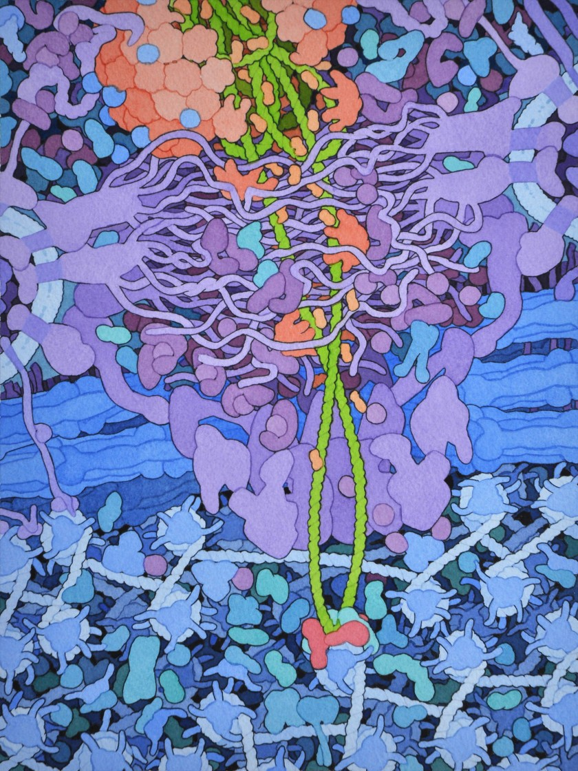 Interview: David S.Goodsell: Artist + Scientist