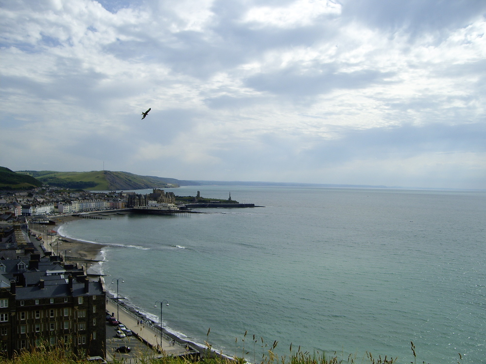 Red Kite flying over Aberystwyth.