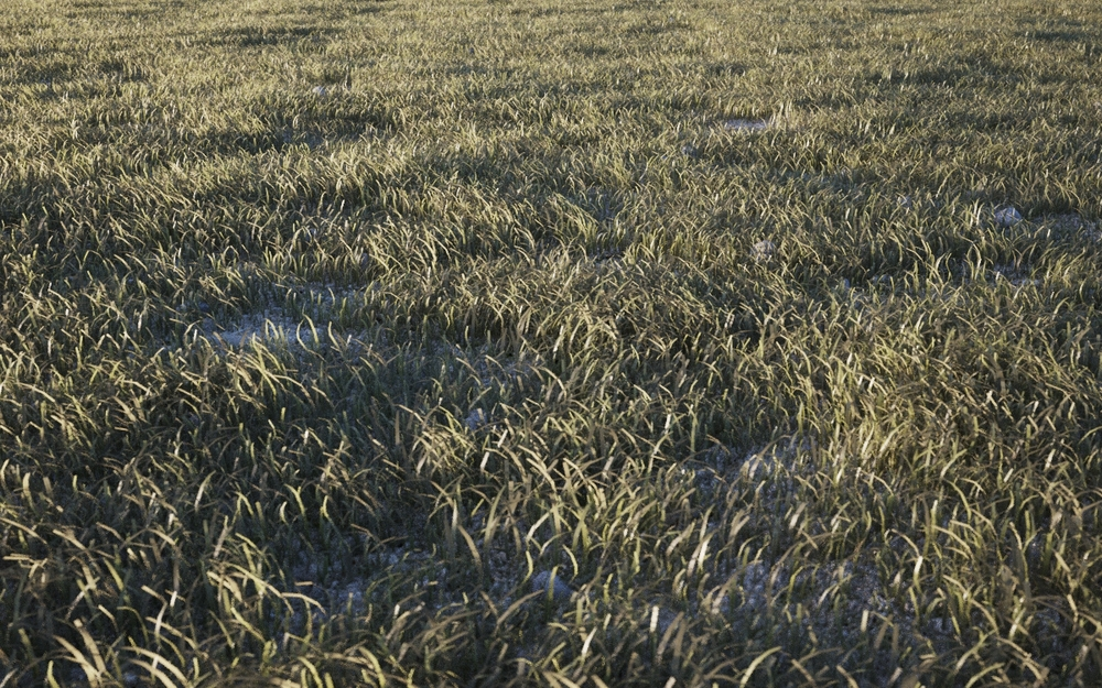 Basic grass clumps scattered