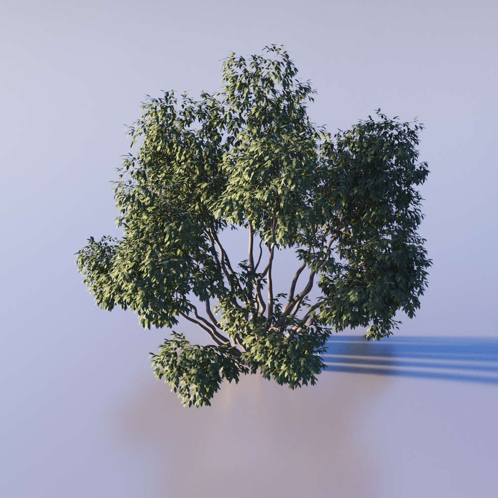 Bush provided by 3dmentor