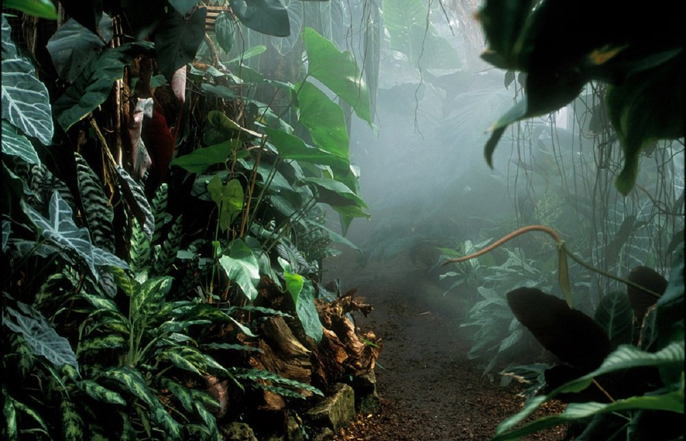 living-rainforest-newbury-1200.jpg