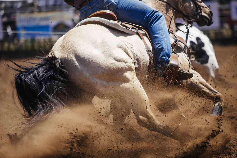 Horse catching up with a cow in the team roping event at the college rodeo in Brownwood.