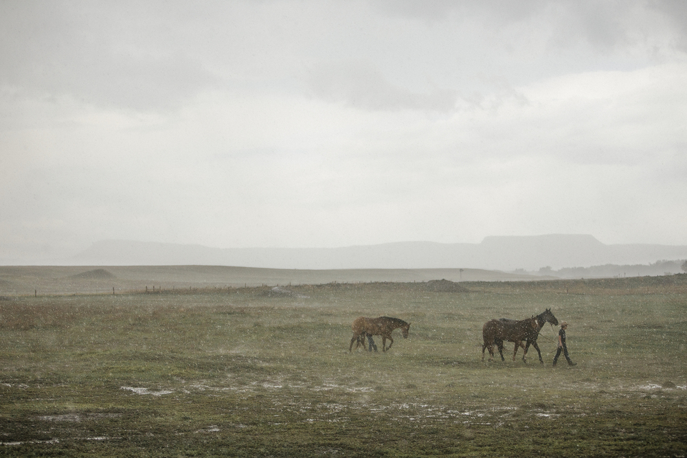 Boy dragging his horses to cover in a hail storm in New Mexico.