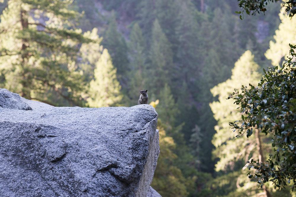2017_susanadler_YosemiteTrailMavens-0198.jpg