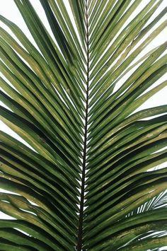 3-20-palm-frond.jpg