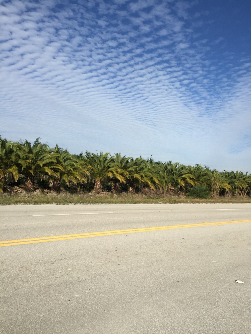 miles and miles and miles of palm tree farms