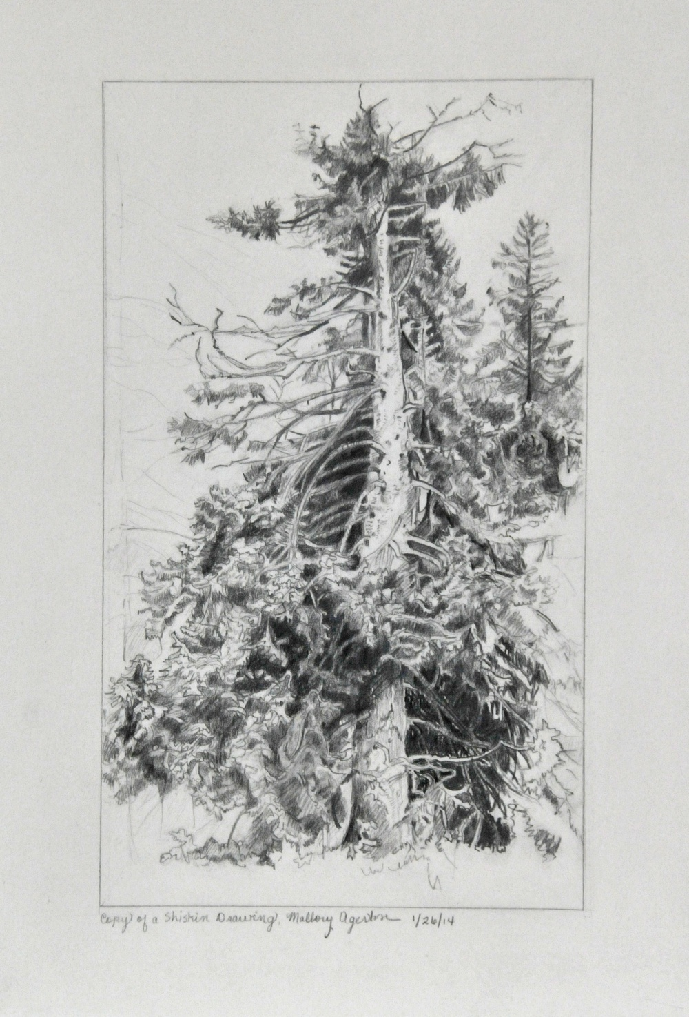 Master copy of Shishkin Tree