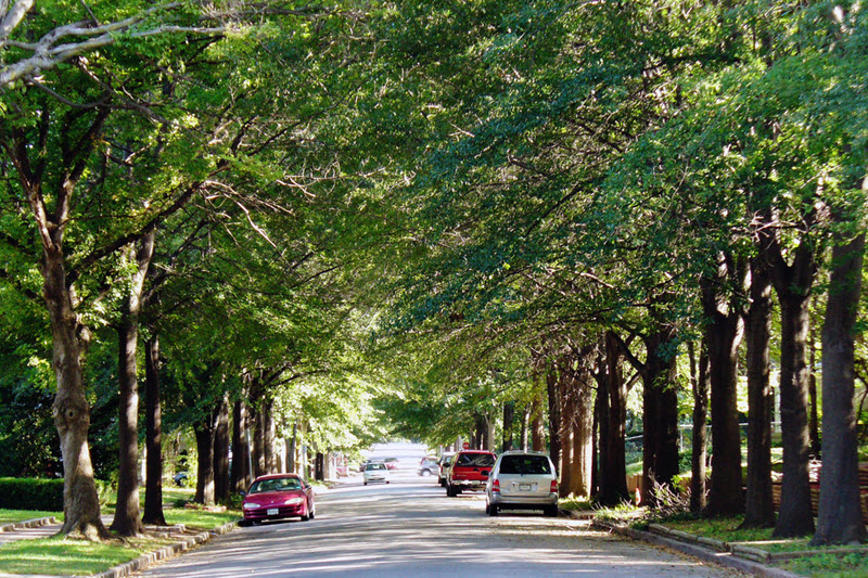 Street trees working their magic in Tulsa, OK. (Source: Daniel Jeffries)