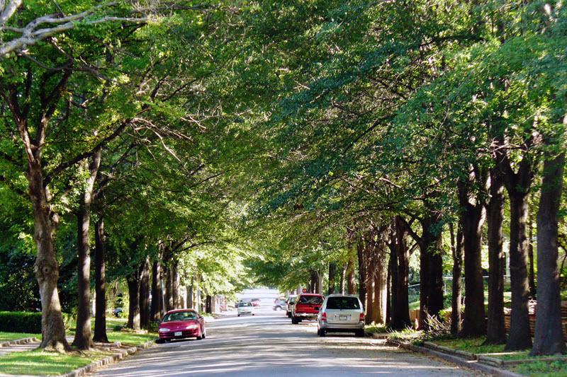 Street trees working their magic in Tulsa, OK.  Photo by Daniel Jeffries