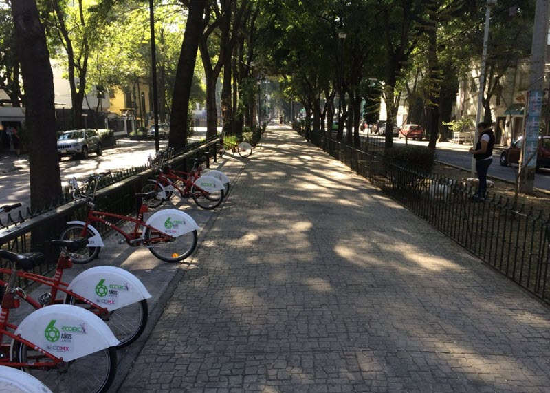 Street trees along a Mexico City boulevard offer respite from the afternoon sun.  (Photo by Sarah Kobos)