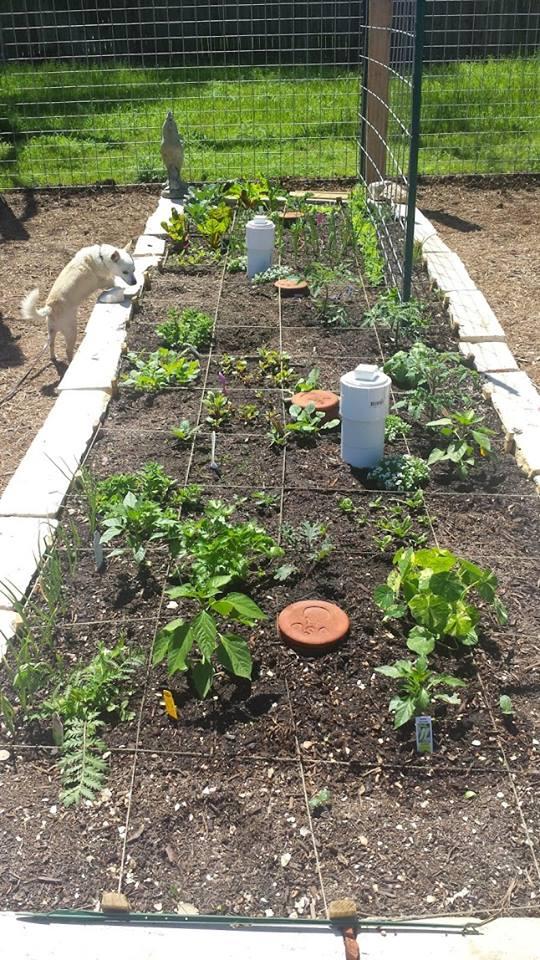 A community garden