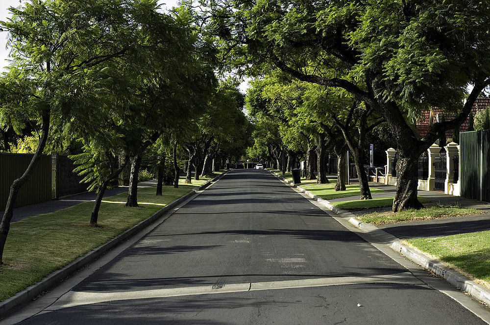 In praise of street trees strong towns for Garden trees adelaide
