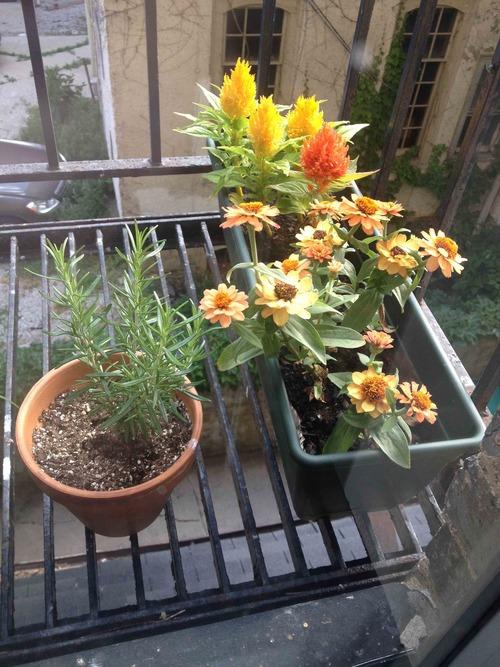 A snapshot of Rachel's balcony garden.