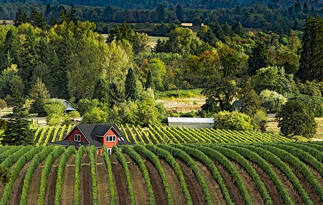 Willamette Valley wine country. (Source:  Sheila Sund )