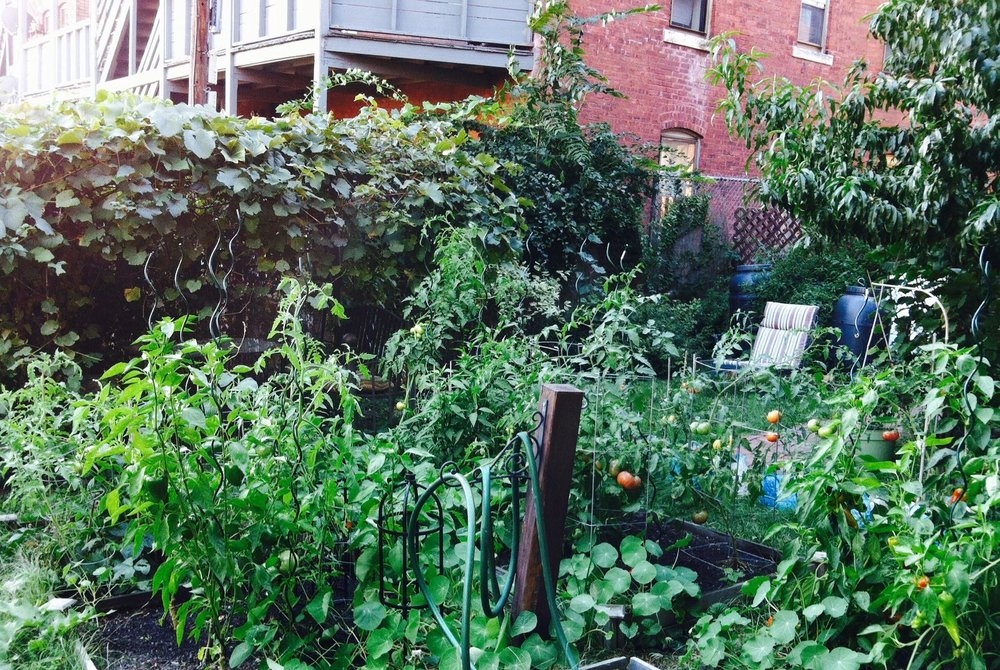 The backyard urban farm (Source: Steve Shultis)