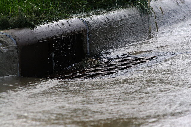A curbside storm drain (Source:  Robert Lawton )