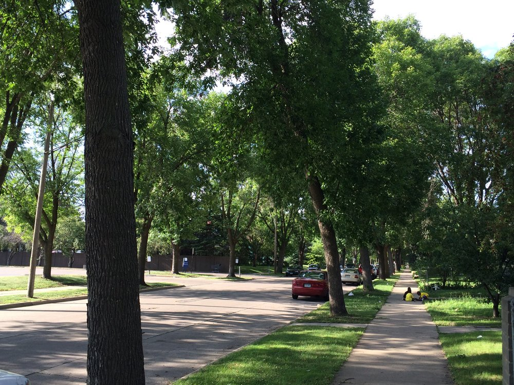 Tree-lined street in Minneapolis, MN. (Photo by Sarah Kobos)