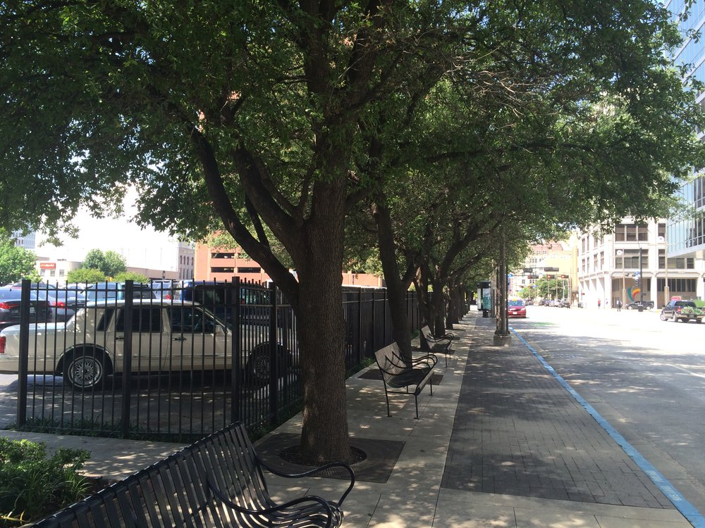 Trees working hard to add dignity to a surface parking lot. (Photo by Sarah Kobos)