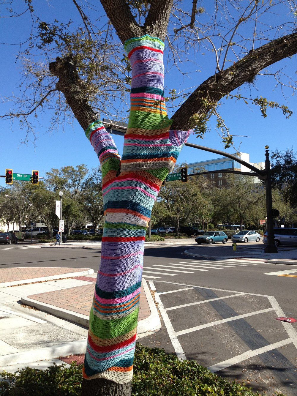 Street tree saying warm in St. Petersburg, FL (Photo by Sarah Kobos)